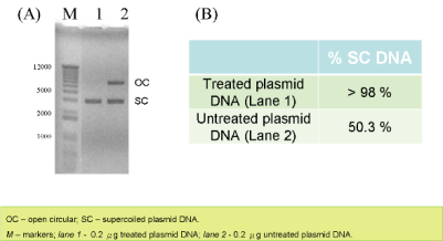 Supercoiled Plasmid Table